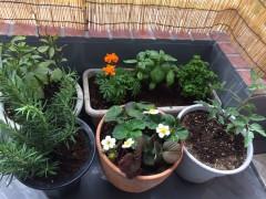 garden2015